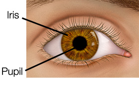 Lens and Retina