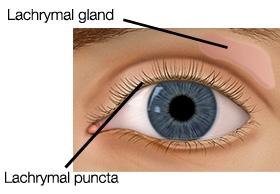 Tear Glands